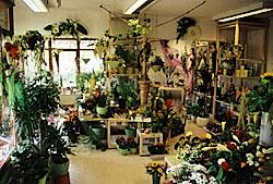 Blumenfachgeschäft in Tiengen (Innenansicht)